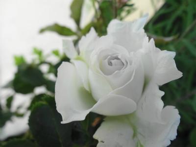 DSC04027.jpg