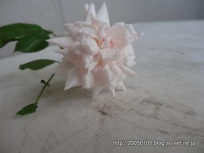 DSC09549.jpg