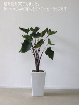 plantsmarket (1).jpg